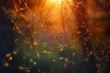 Photo pour Toile d'araignée entre les arbres dans la forêt, fond naturel abstrait, vue magique étonnante, beau fond de lumière du coucher de soleil orange doux, nature des bois - image libre de droit