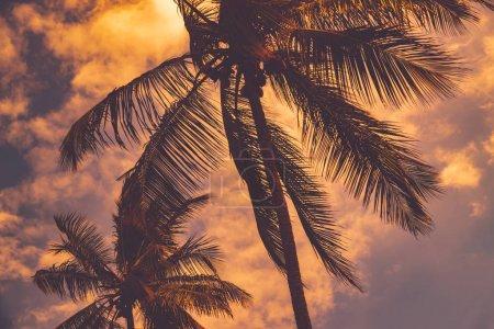 Photo pour Palmiers sur fond de ciel couchant, silhouette d'arbres tropicaux sur fond de paysage nuageux du soir, vacances d'été sur îlot exotique - image libre de droit