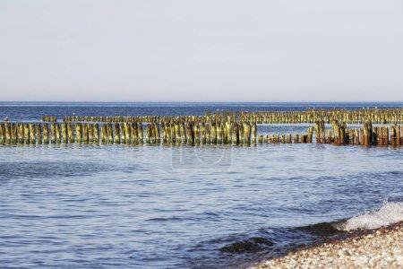 teilweise verrottete hölzerne Buhnen in Meerwasser