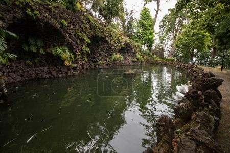 Tropical garden Monte Palace