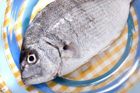Gilt-head bream fish