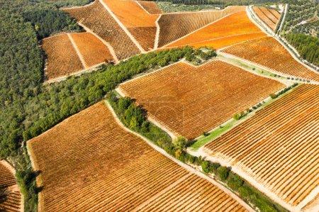 Photo pour Vue aérienne du vignoble en automne, région du Chianti, Toscane, Italie - image libre de droit