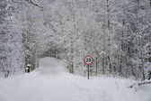 Traffic sign in the forest full of snow