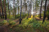 Summer Morning in Green Forest