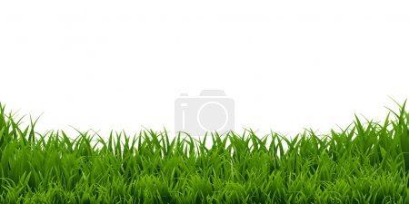 Illustration for Green grass Border isolated on white background, Vector Illustration - Royalty Free Image