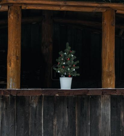 Christmas tree at wooden building