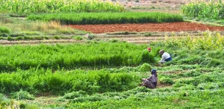 Self-sufficient labor-intensive farming in Morocco...
