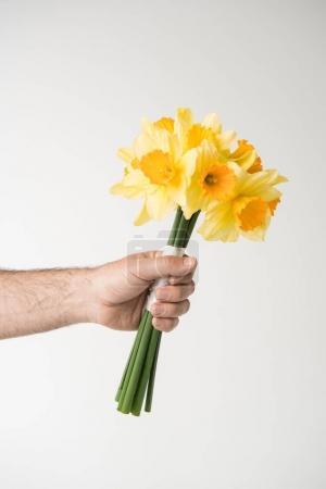 Photo pour Main mâle tenant bouquet de jonquilles, isolé sur blanc - image libre de droit