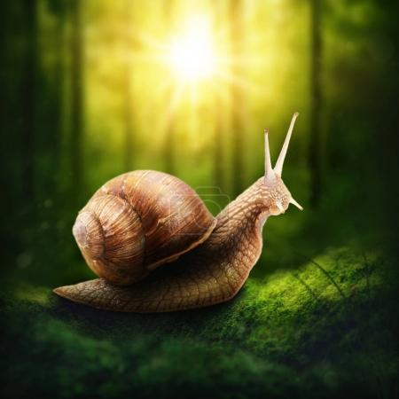 Snail in a forest