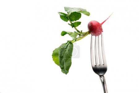 fresh radish on fork