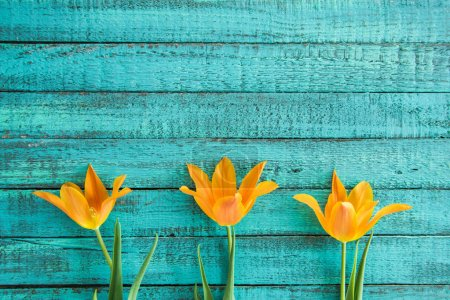 Photo for Top view of yellow tulips in row on turquoise wooden tabletop. wedding flowers background concept - Royalty Free Image