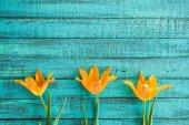 """Постер, картина, фотообои """"Желтые тюльпаны в ряду"""""""