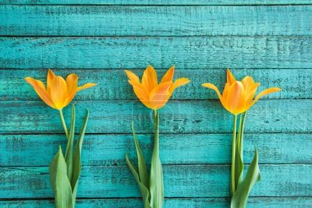 Photo for Top view of yellow tulips in row on turquoise wooden tabletop, wedding flowers background concept - Royalty Free Image
