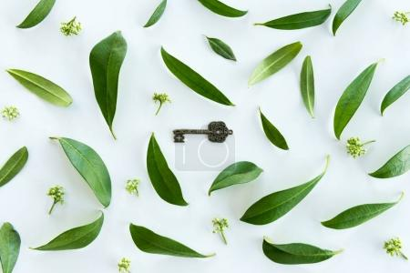 Photo for Top view of beautiful fresh green leaves and old key isolated on white - Royalty Free Image