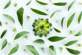 """Постер, картина, фотообои """"зеленый образец листьев"""""""