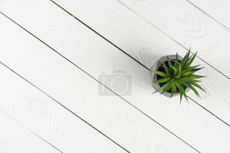 Wooden texture and green plant