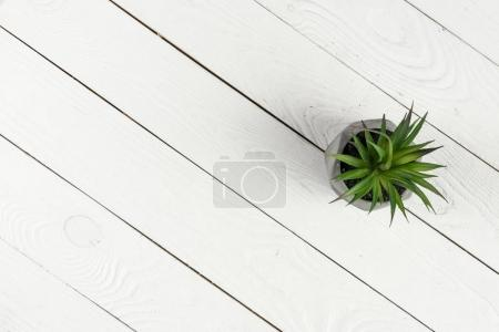 Photo for Top view of green potted plant on white wooden background - Royalty Free Image