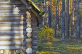 Wooden house in the autumn in the forest