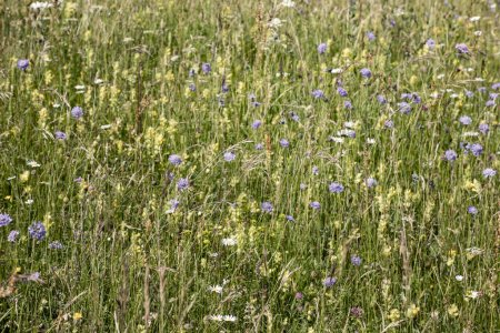 Photo for Beautiful wild flowers grow at the green meadow - Royalty Free Image