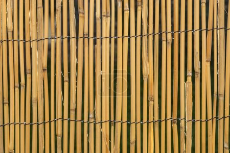 Photo for Harmonic background of brown bamboo mat - Royalty Free Image