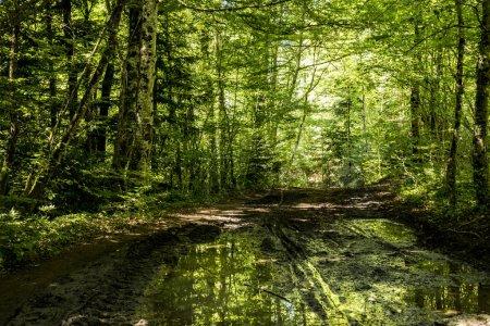 Photo pour Forêt pittoresque au lac de narlay dans le Jura du Frasnois - image libre de droit