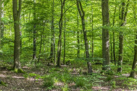 Photo pour Fond d'arbres verts avec soleil dans la forêt - image libre de droit