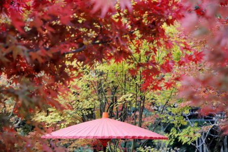 Photo for Japanese traditional red umbrella with autumn leaves - Royalty Free Image
