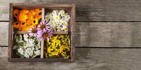 Photo pour Herbes médicinales Marguerite commune Fil de calendula dans une vieille boîte en bois sur la table. - image libre de droit