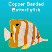 Copper Banded Butterfly fish exotic fishtropical marine fish Vector