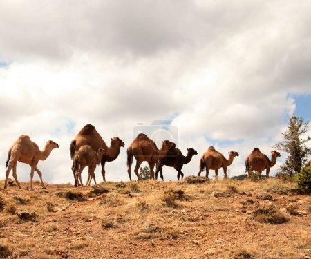 Nomadic caravan rests Turkey-Konya