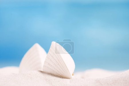 white tropical shell on white sand