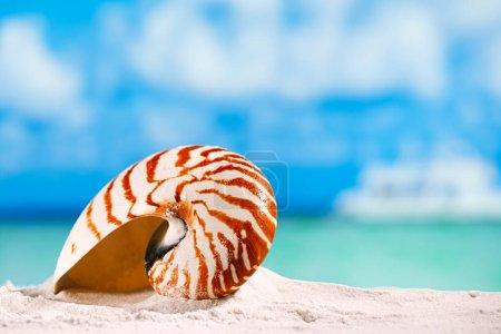 nautilus shell on white sand