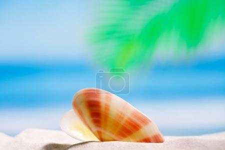 tropical seashell on beach