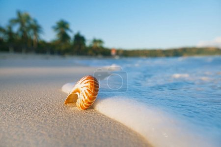 nautilus sea shell on idyllic sandy beach with waves and seascape in sunlight