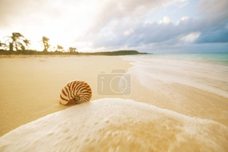 nautilus sea shell on golden sandy beach with waves and seascape in sunset light