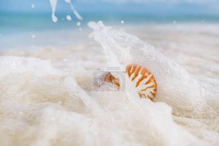 nautilus sea shell in foamy waves on sandy beach