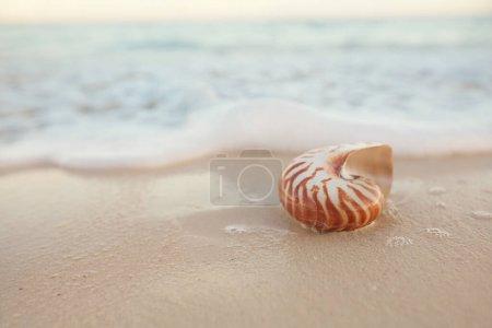 Photo pour Nautilus coquille de mer sur la plage de sable doré avec des vagues et le paysage marin dans la lumière du coucher du soleil, peu profonde dof - image libre de droit