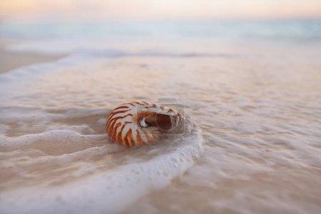 Photo pour Nautilus coquillages sur une plage de sable doré avec des vagues et un paysage marin au coucher du soleil, dof - image libre de droit
