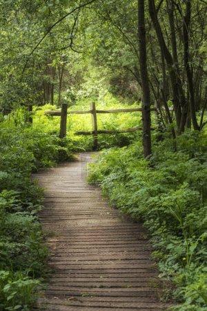 Photo pour Superbe image de paysage de promenade en bois à travers la forêt verdoyante de campagne anglaise au printemps - image libre de droit