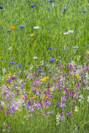 Foto de Imagen de paisaje de la pradera de flores silvestres en verano - Imagen libre de derechos