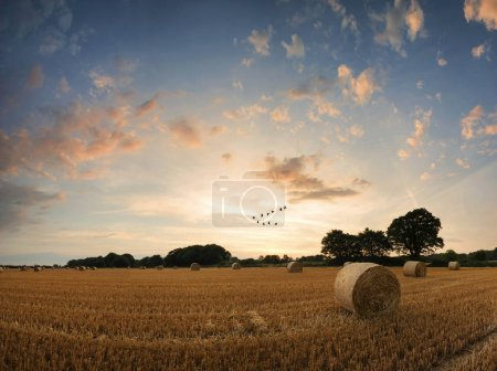 Photo for Stunning Summer sunset landscape over field of golden hay bales - Royalty Free Image