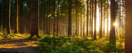 Silent Forest in spring