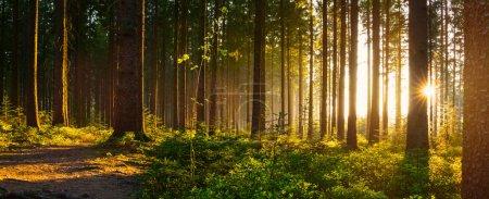 Photo pour Forêt silencieuse au printemps avec de beaux rayons lumineux - wanderlust - image libre de droit