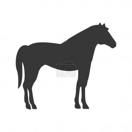 silhouette with horse domestic animal