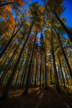 Golden shine autumn panorama scene in the forest, the morning su