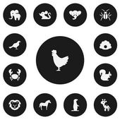 Set Of 13 Editable Zoo Icons Includes Symbols Such As Conch Proboscis Gull And More Can Be Used For Web Mobile UI And Infographic Design