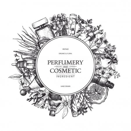 hand drawn perfumery and cosmetics ingredients