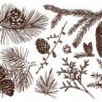 Vintage evergreen plants sketch set - fir, pine, s...