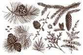 Vector collection of conifers illustration