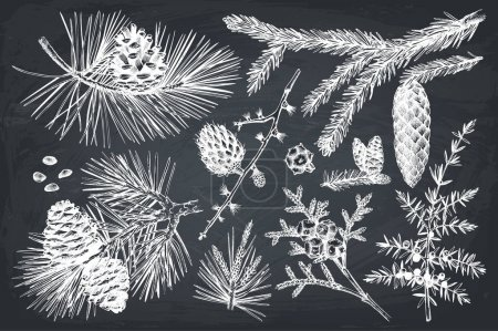 Vector collection of conifers illustration.
